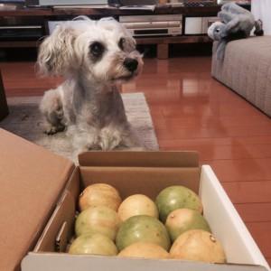 届けられた宝箱を開けると、これなんですかと飼い主に問うような仕草の我が愛犬